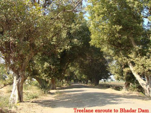 Treelane to Bhadar Dam