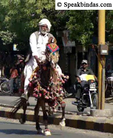 riding-horse