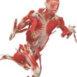 body-organs