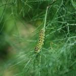 butterfly-5.jpg