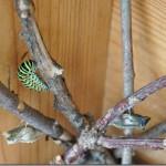 butterfly-8_thumb.jpg