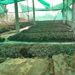 Vermi compost plant at DNK Organic Farm