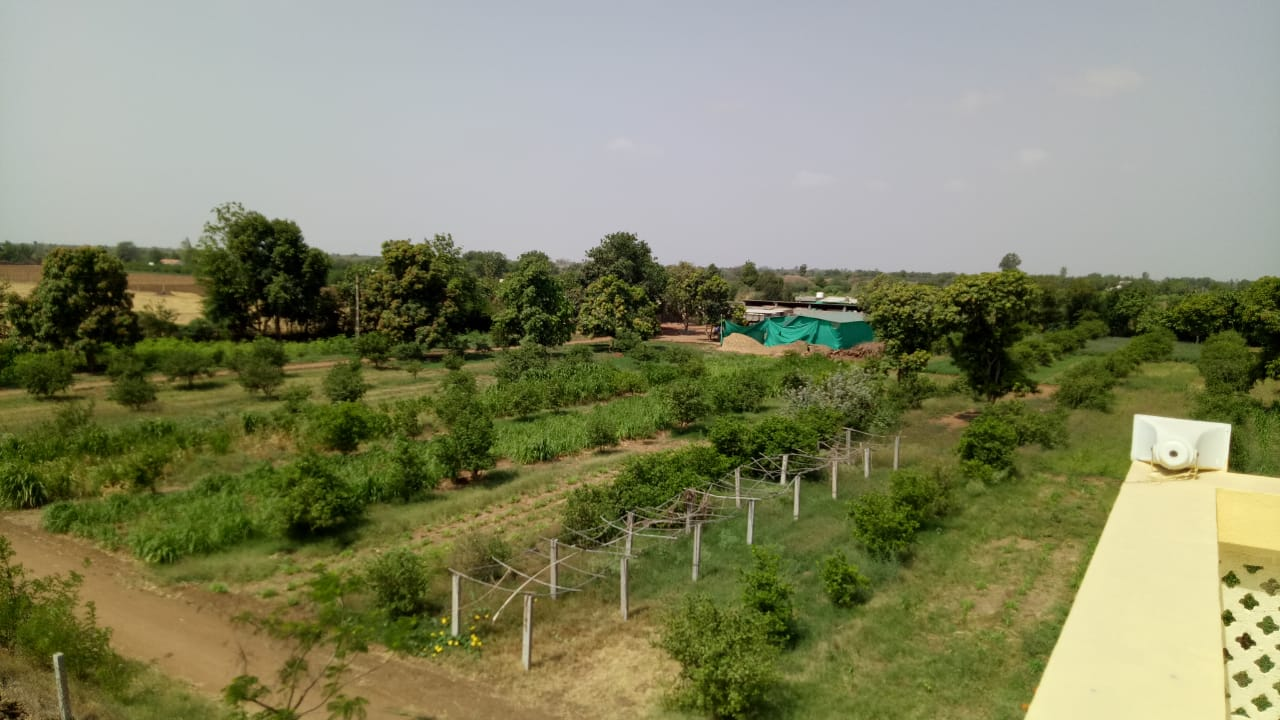 View of DNK Organic Farm2