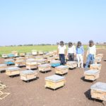 Honey-Bee-Farming